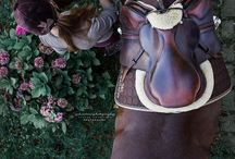 Beautiful horse photos