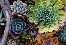 Succulents & flowers