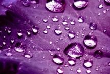 Purple Passion / Color of Purple / by Marcia Meader