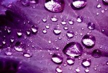 Purple. Just Purple! :-) / by LuAnn Ward