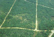 Eksploited of Heart Borneo / Pemandangan hutan hujan kalimantan dipotret dari udara, gambar diambil pada saat pemetaan lokasi dan luas perkebunan sawit oleh PT.LG Belitang Hilir, Sekadau, Kalimantan Barat, Indonesia.