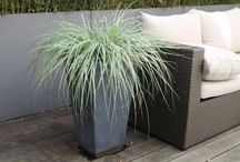 plants terrasse