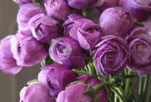 Purple - THE COLOUR
