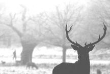 Deers will be Dears
