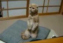 videos de gatitos
