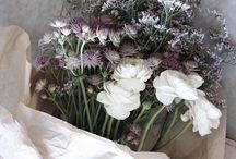 Blomster / Flowers