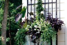 Garden / Flowers