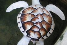 Albinoseaturtle