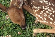 It's Bambi and friends