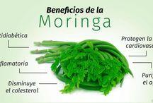 Noriega remedios