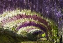 Au jardin / by Alice