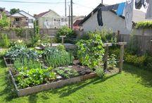 My backyard project / by Danielle Burrows Reed
