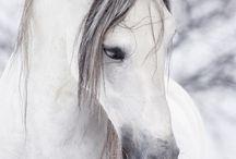 Hästar!