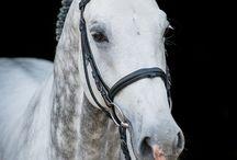 Horse Portraits 2015 / Horse Portraits