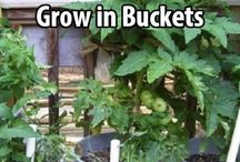 15 fruits and veggies grown in buckets