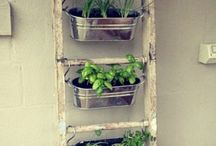 Domowy ogrodek