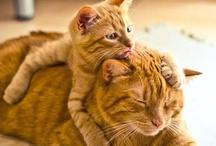 Meow / Kitty / by Lisa Kidd