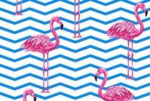 Flamingos ❣️