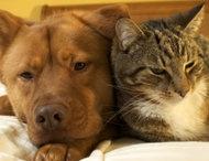 Common Pet Poisons