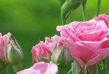 Vakre blomster / Blomsterinspirasjon