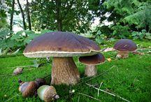 Houby - Mushrooms