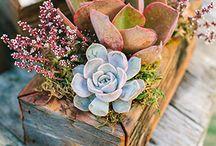 Flowers Aranjaments