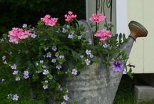 Outdoor  Decor and Flowers