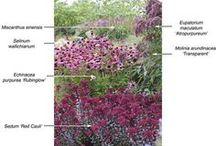 plantensoorten PIET OUDOLF
