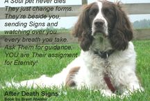 Dog Loss Quotes, Cat Loss Quotes from Pet Spirits & Animal Souls / Inspirational Dog loss quotes, cat loss quotes, pet loss quotes from Pet Spirits and Animal Souls in Heaven w Brent Atwater Animal Medium