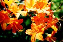 Color-Orange / For my love of the color orange