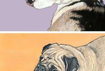 Pet illustrations