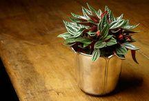 """Un Giardino in Casa / Vasi per fiori, annaffiatoi, fioriere, ma anche caraffe, brocche o boccali che donando quel tocco di raffinata originalità ad ogni """"angolo fiorito""""."""