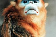 For my Love of Primates