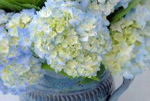 Цветочные композ