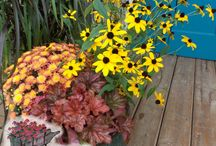 Fall Combinations / There are many fall accent plants and perennials that make great fall combos for fall decor in containers or planted in the ground.  Enjoy these combination ideas and bring fall color to your home.