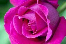 Rose Rani