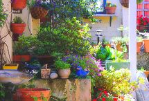 Potted Garden Inspiration
