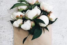 Virág flowers