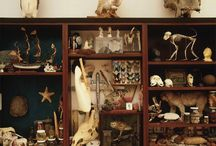 Wunderkammer / Curiosity Cabinet / Oddities, Bizzarities, Strange and Curious objects displayed in interesting collections.