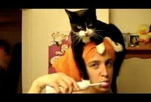 """""""CAT VIDEOS"""" / FUNNY CATS / by Jackie Walmer"""