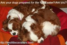 Puppy Love / My #puppies and more!