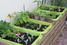 Garden Ideas / by Melissa Van Horn