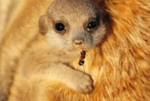 Baby Animals / Because CUTE!