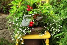Potted Gardening Ideas / by Sarah Bauer