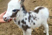 Minature donkeys and Horses