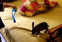 Домашние животные / О наших домашних животных, о зайчике, кошках, собаках и даже козах