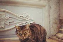 SABO & CAT