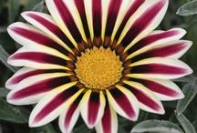 flower and garden favs / by Rhonda Burden