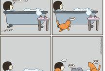 Cat VS Women