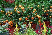 Frutas em vaso